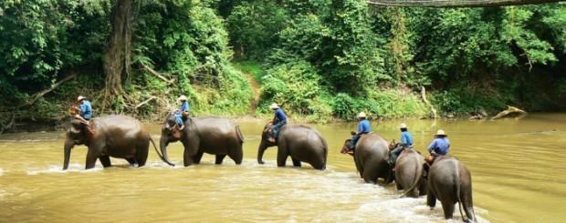 Chiang Doa Elephant camp - Thailand Tour