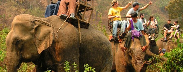 elephant riding - thailand tour